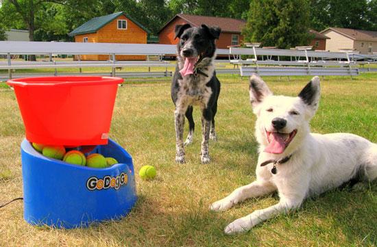 Самые полезные гаджеты для собак - обзор - купить - цены