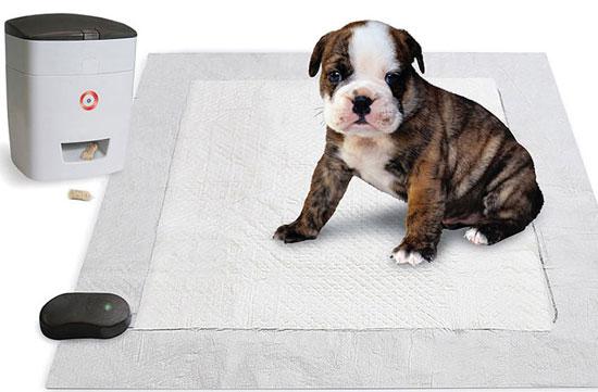 Самые полезные гаджеты для собак - обзор - где купить - цены